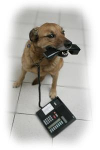 Contact Us - Dog with Phone