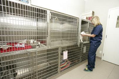 Dog ward